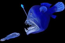 psydaddymp3-也许它们不够秀美,但是长相非常奇特.这些海洋生物生活在极其寒冷...