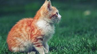 萌宠猫超清桌面壁纸高清大图预览1920x1080 动物壁纸下载