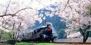 京都市旅游行程