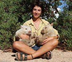 ...两只白色袋熊在一起-澳大利亚发现两只罕见白化袋熊