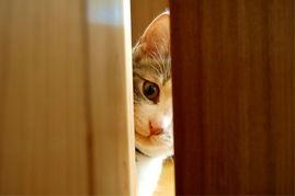艹猫0补丁krkr2-主人不在家 猫猫做什么
