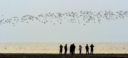 候鸟鄱阳湖越冬