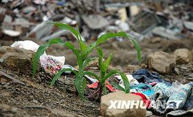 ...).北川县城是汶川大地震的重灾区,从5月20日开始封城.记者于6...