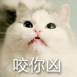 猫咪巨凶表情包下载 猫咪巨凶表情包官方下载