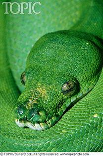 世界上最恐怖的动物