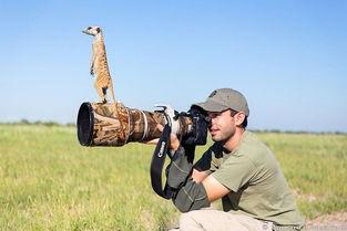 在野外拍摄野生动物是一项十分有趣的工作.摄影师们所拍摄的照片...