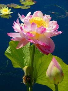描写鲜花的诗句-关于写花的对联古诗词