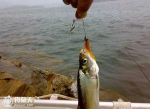 路亚翘嘴鱼的几点应用诀窍及操作技巧