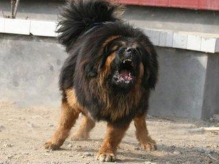 ...微量狂犬病毒,鬼脸獒王是这么来的